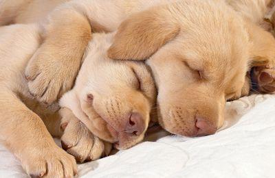 Fontos a pihentető alvás